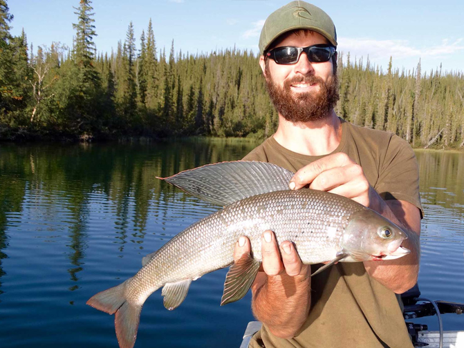 Arctic Grayling at Plummers in Northwest Territories Canada