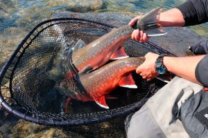 Fly-fishing-Week-at-plummers