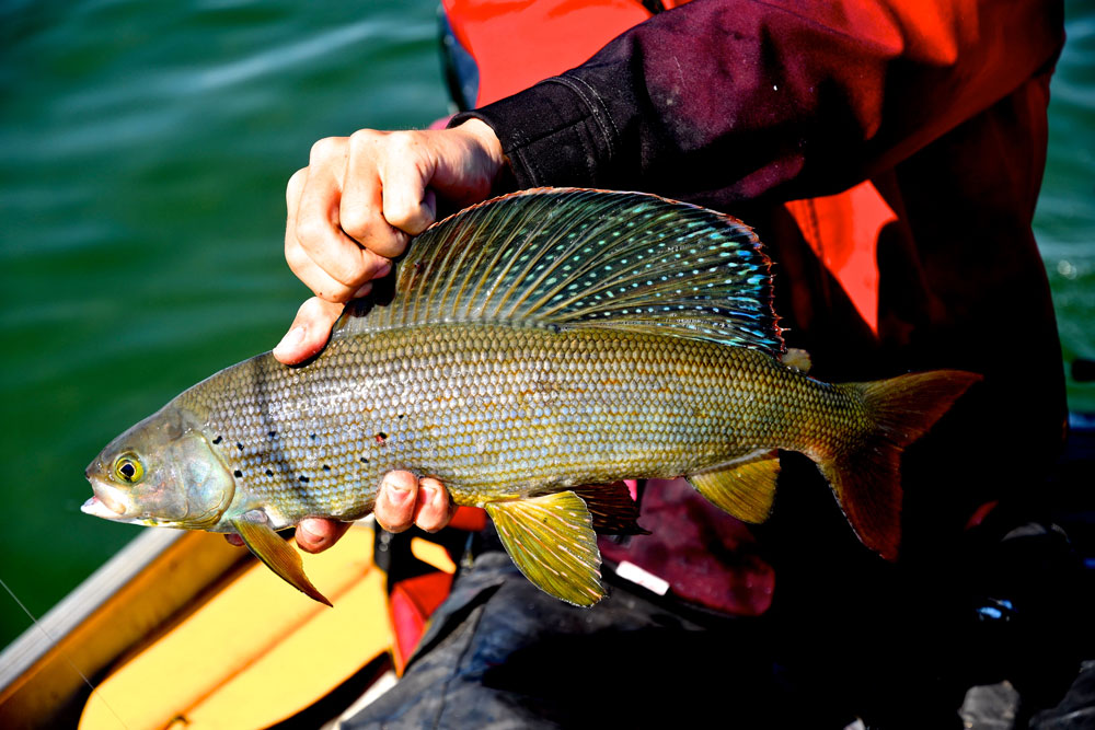 Grayling Fishing Great Bear Lake