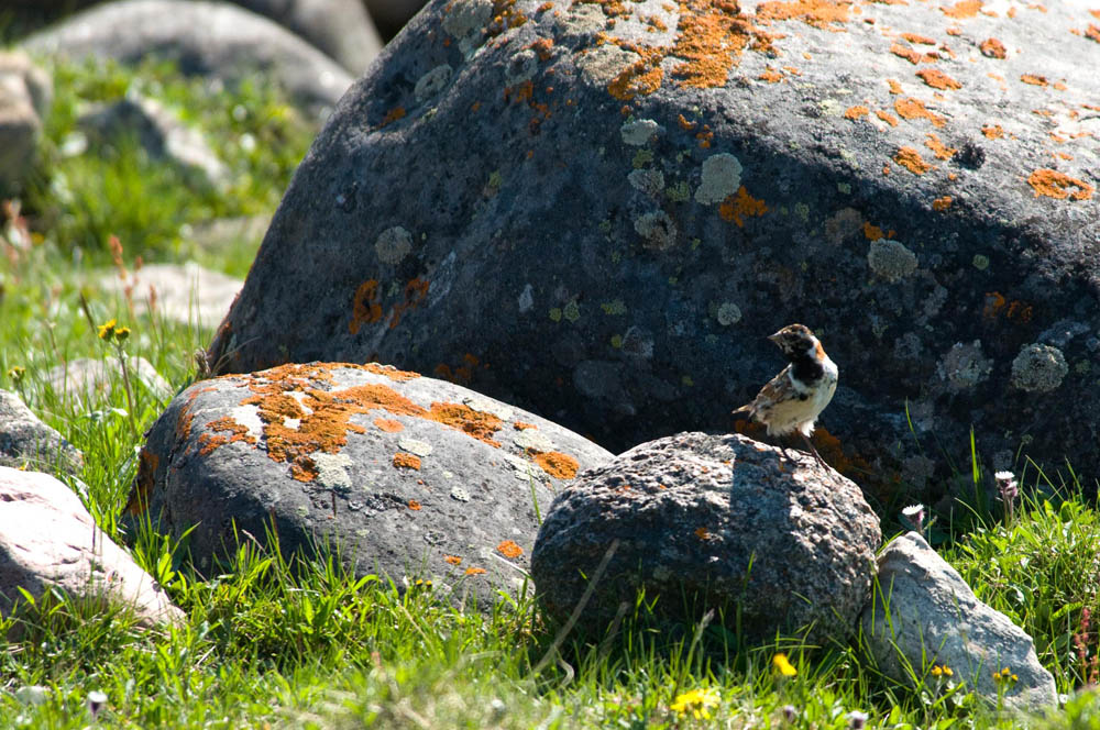 Birds - Wildlife at Plummer's Arctic Lodges, NWT