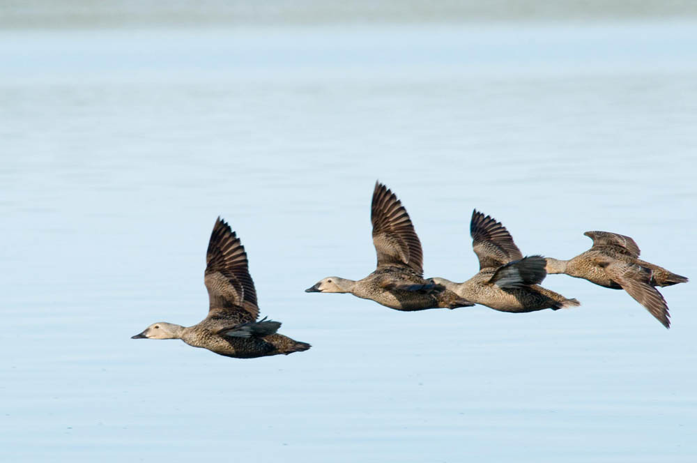 Birds at Plummer's Lodge on Great Slave Lake, NWT