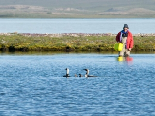 Birds at Plummer's Arctic Lodges on Great Slave Lake, NWT