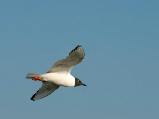 Birds at Great Slave Lake in northern Canada