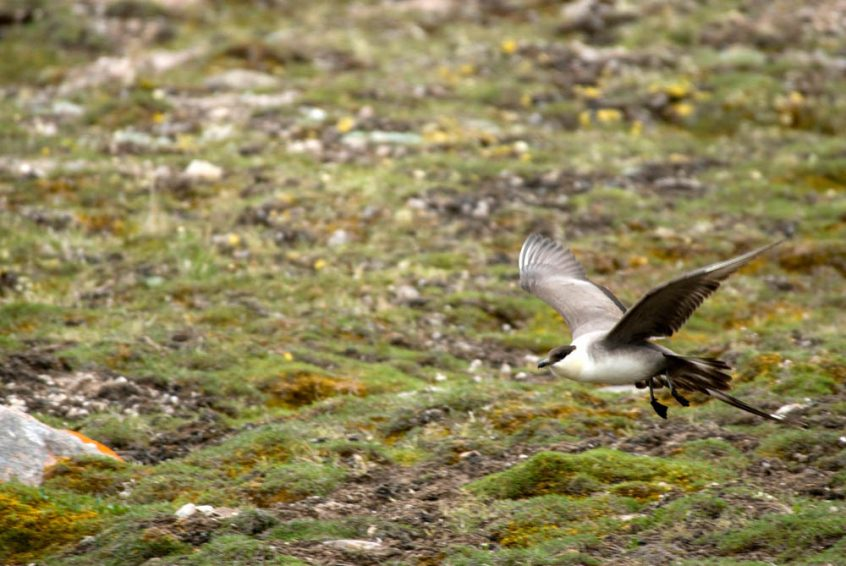 Bird at Great Bear Lake, Plummer's Arctic Lodges