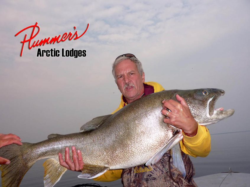 Giant lake trout catch at Great Bear Lake - Plummer's Lodge