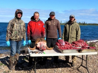 Musk ox meat - Plummer's Lodge hunting trips
