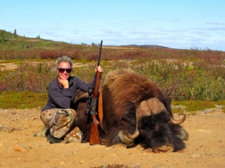 Hunting musk ox in Canada's Arctic