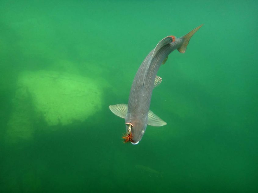 Fly fishing trips at Plummer's Arctic Lodges